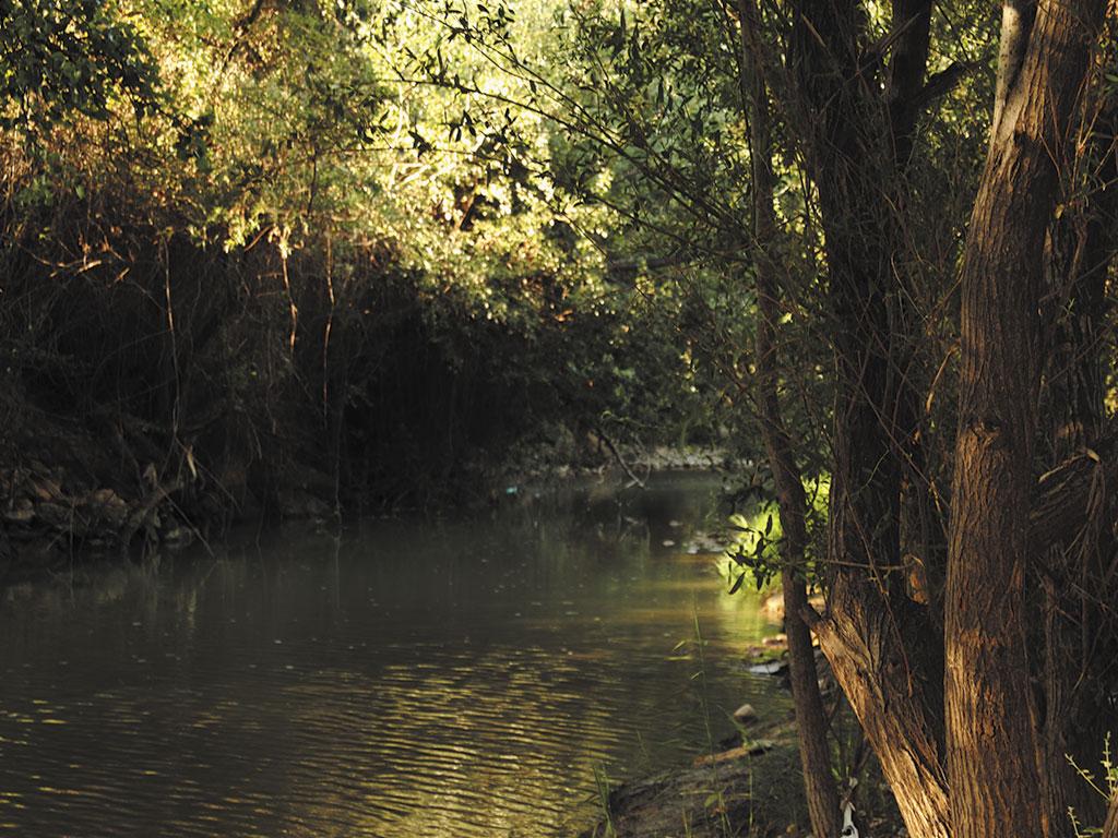 Detalle vegetación y río Jalón en El Caracol
