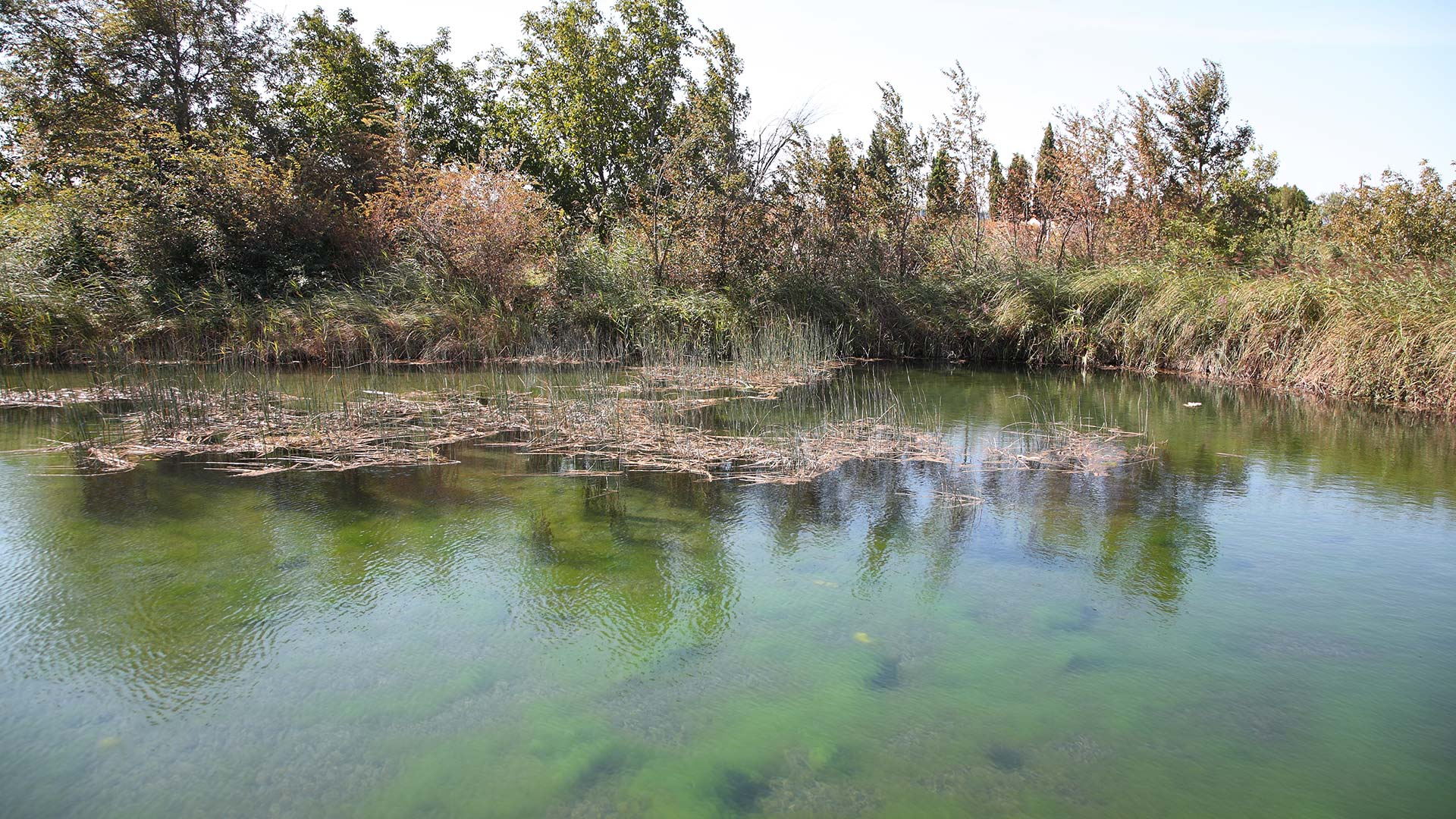 Agua y vegetación en Marlofa