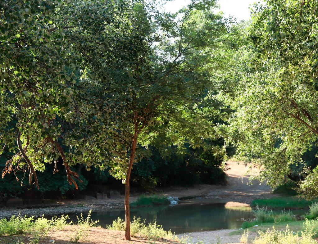 Árboles y ribera del Jalón.