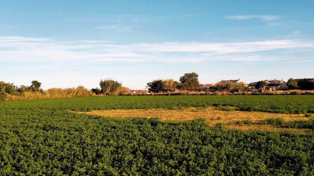 Huertas y campos Ribera Alta del Ebro.