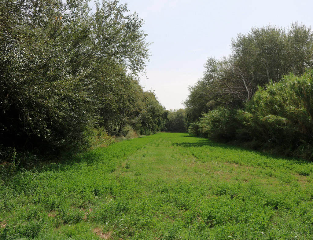 Vegetación en el Jalón.