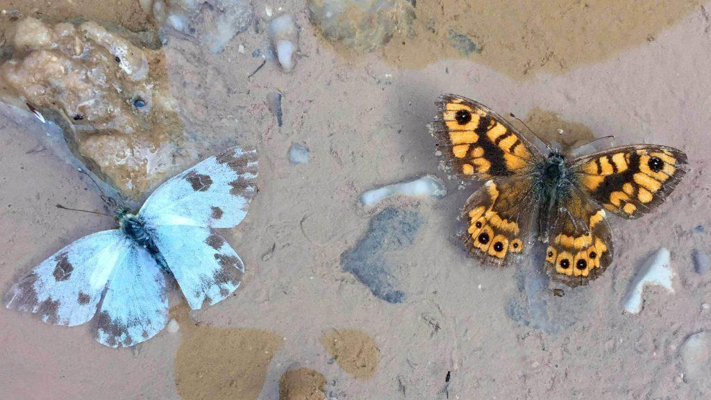 Insectos en agua salina.