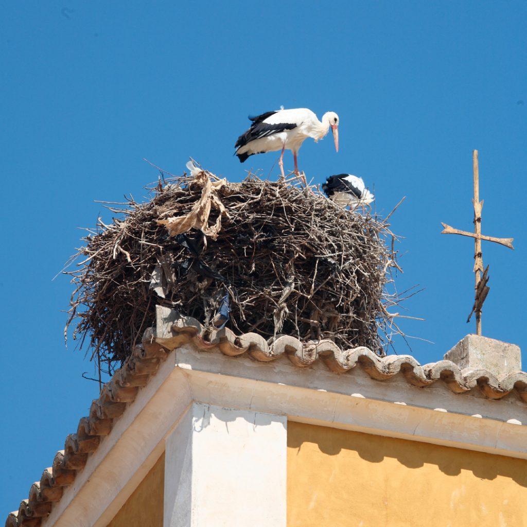 Cigúeña en su nido sobre el tejado del palacio del barón de La Joyosa